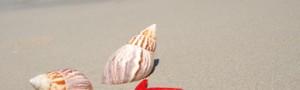 Scegli le vacanze al mare in Romagna con l'offerta di Giugno all'Hotel Plaza di Milano Marittima